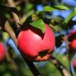 fungicide pomi fructiferi
