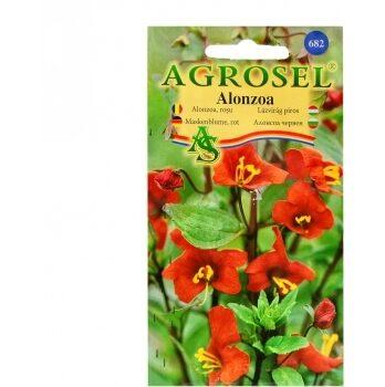 Seminte flori Alonzoa