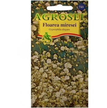 Seminte flori Floarea miresei Agrosel