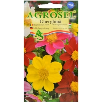 Seminte flori Gherghina simplu Melanj Agrosel
