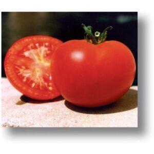 Seminte tomate Baghera F1(1000 sem) Clause
